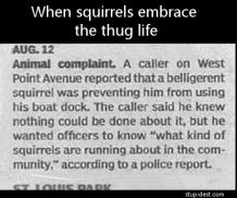 squirrels-belligerent