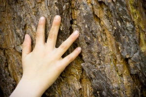 child-hand-on-tree-bark
