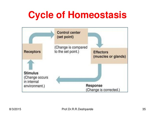 homeostasiscell-physiology-by-profdrrrdeshpande-35-638