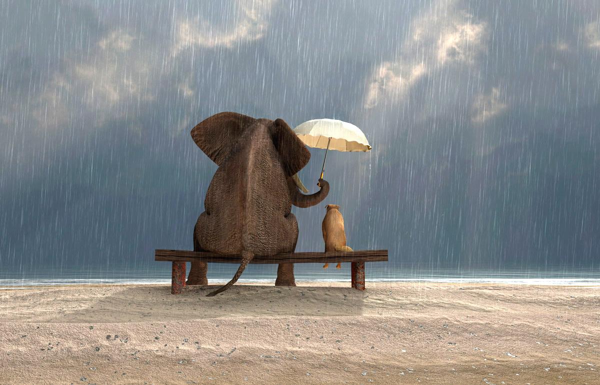 elephant-dog-kindness