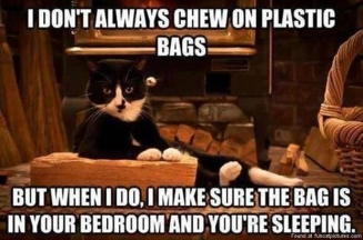 funny-cat-pictures-i-dont-always-chew-on-plastic-bags